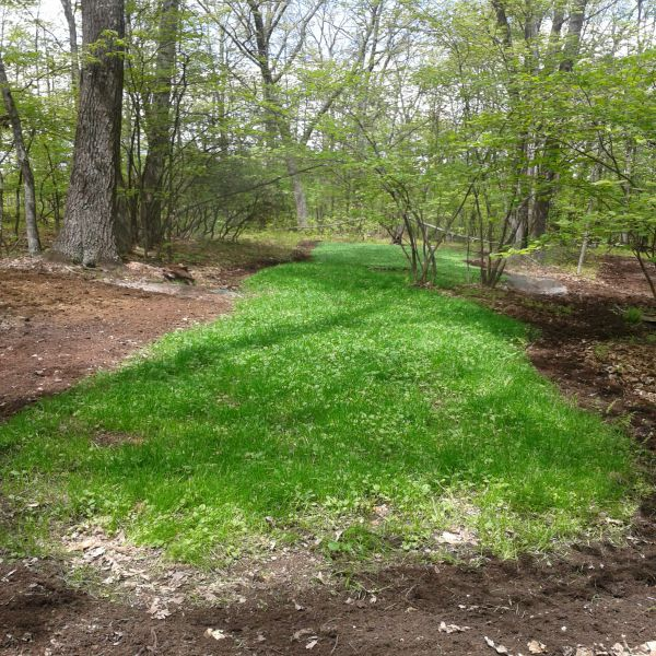 Best Food Plots For In The Woods