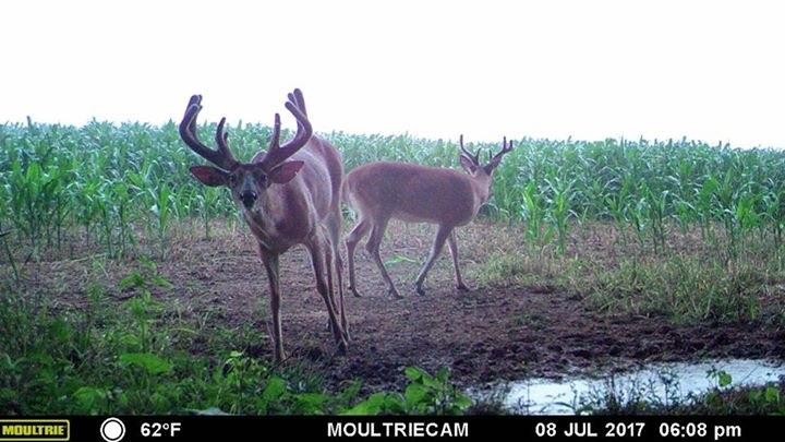 Antler King Trophy Deer Mineral Antler King