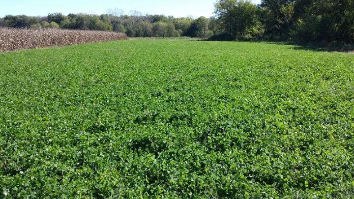 Trophy Clover Plot