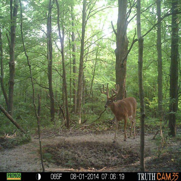 Deer trail muslim dating site