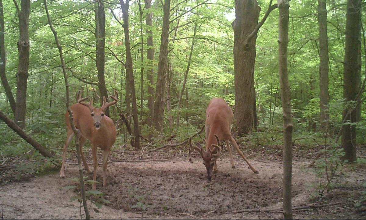 salt-licks-for-deer-per-acre-selena-gomez-naked-in-her-shower