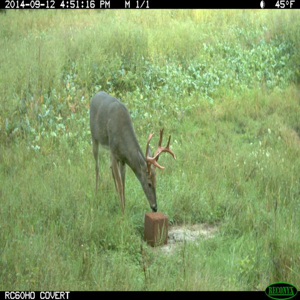 Hi Protein Big Buck Block