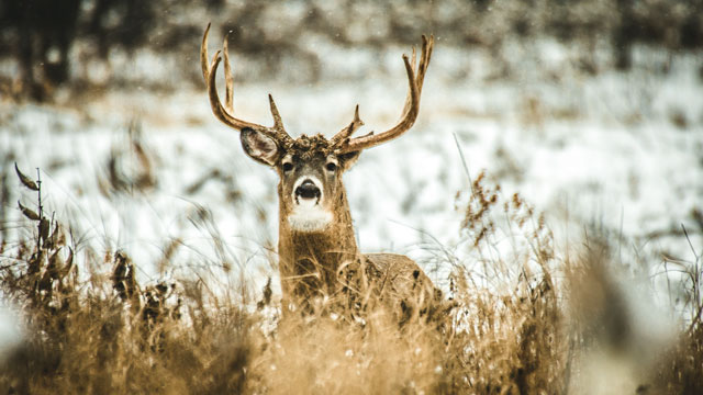 The Leader in Wildlife Nutrition Products - Antler King